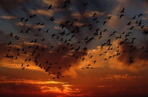 flamingos-1619415_1920